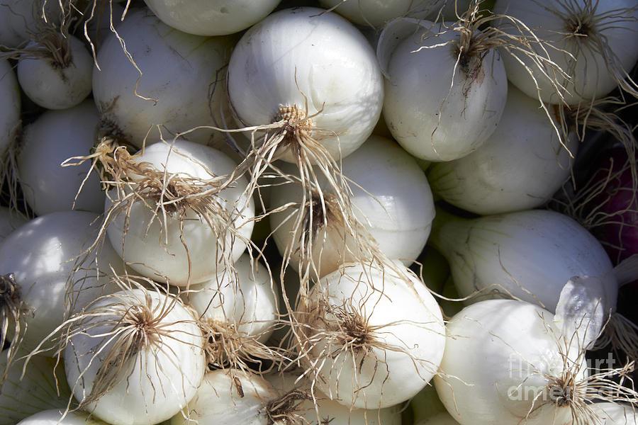 White Onions Photograph