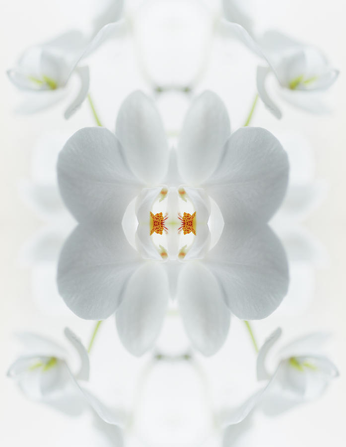 White Orchid Flower Photograph by Silvia Otte