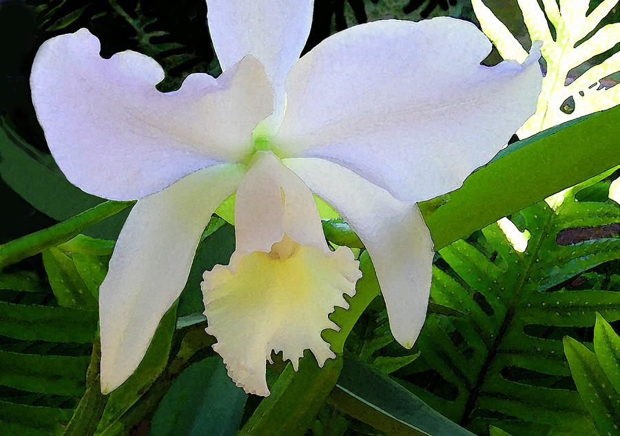 Orchids Photograph - White Orchid by James Temple
