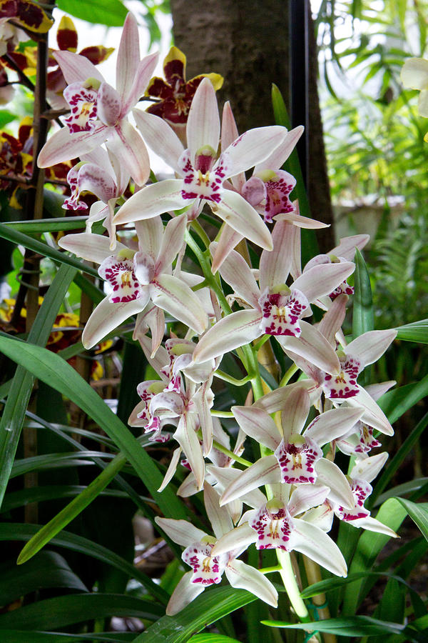 Flower Photograph - White Orchids 1 by Timothy Blair