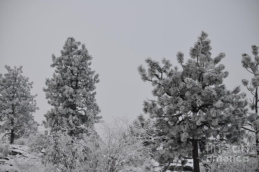 Landscape Photograph - White Out by Greg Patzer