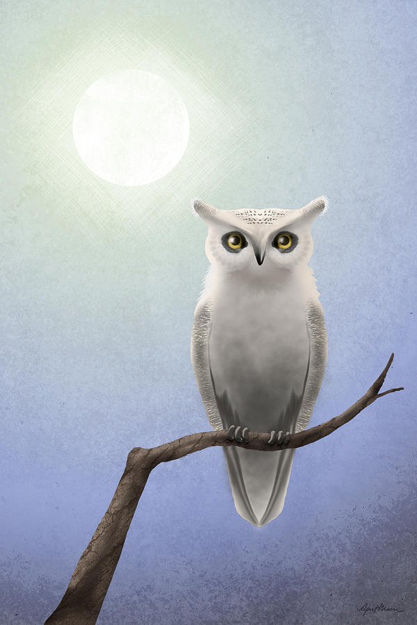White Owl Digital Art