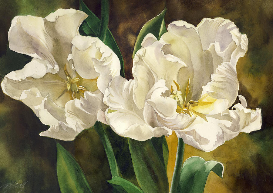 Watercolor  - White Parrot Tulips by Alfred Ng