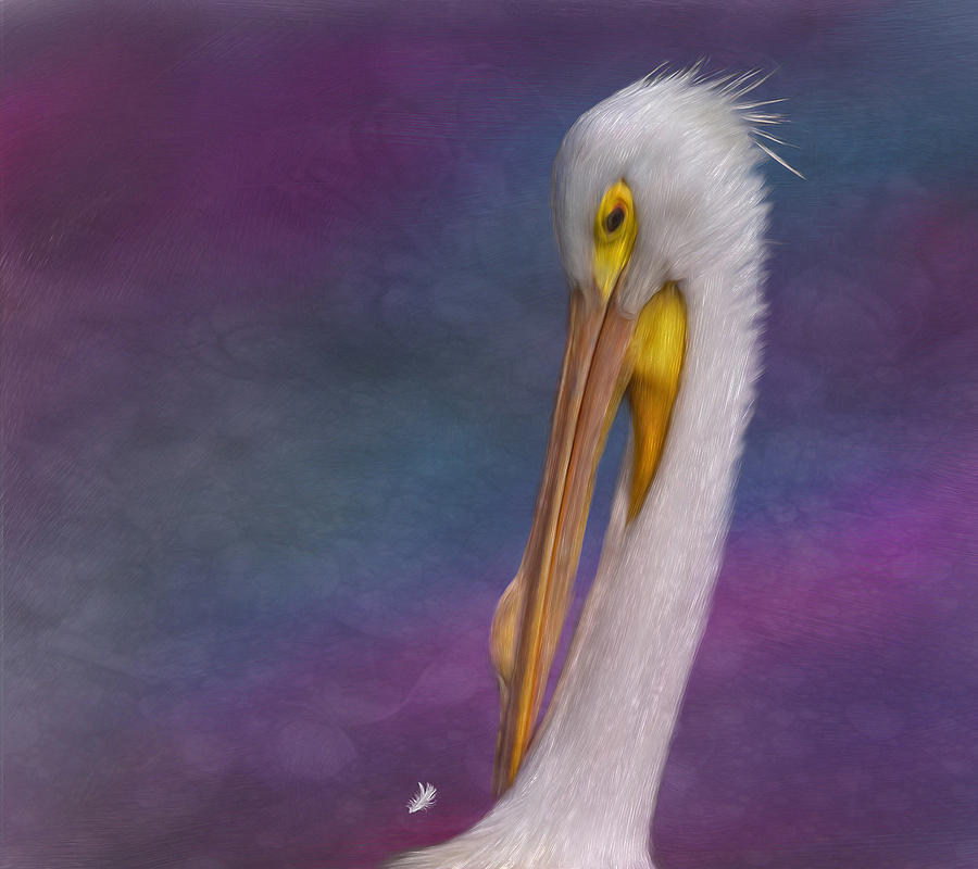 Avian Digital Art - White Pelican by Hazel Billingsley