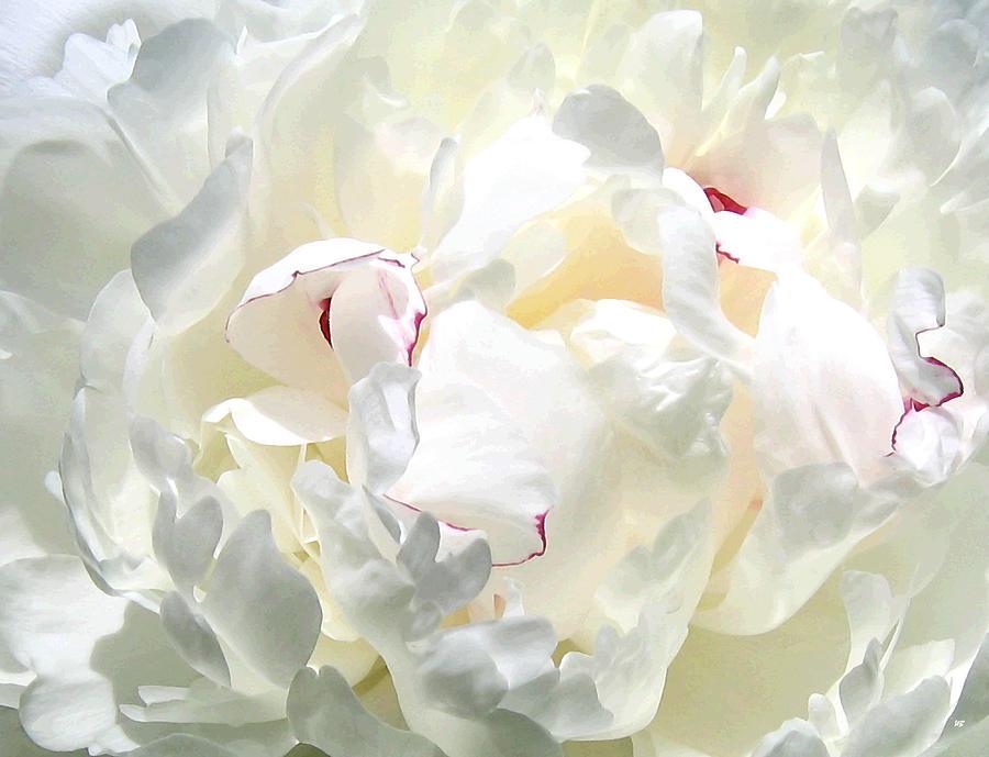 White Peony Photograph - White Peony by Will Borden