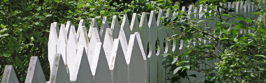 White Picket Fence 5 Photograph