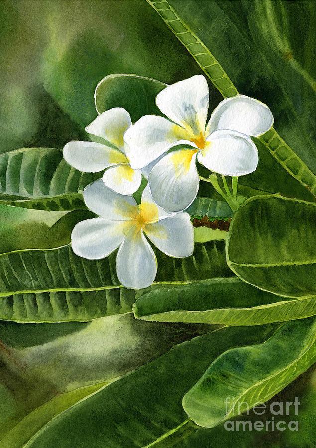 White Painting - White Plumeria Flowers by Sharon Freeman