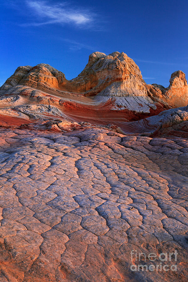 America Photograph - White Pocket Afterglow by Inge Johnsson