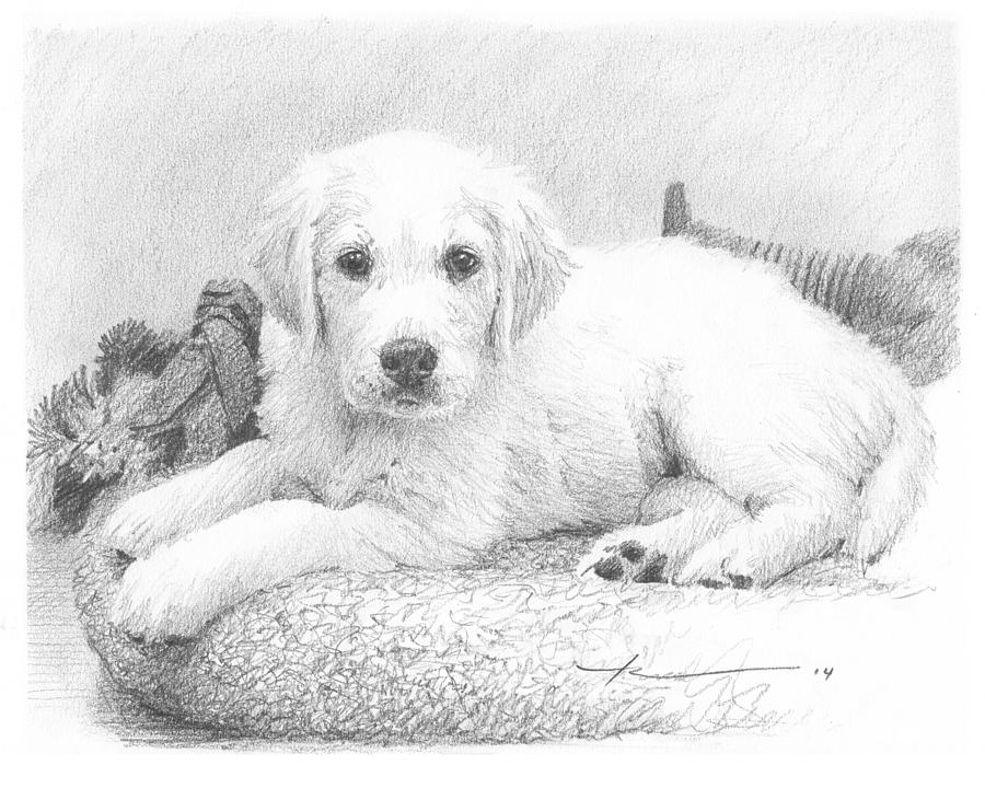 White Puppy Pencil Portrait Drawing by Mike Theuer