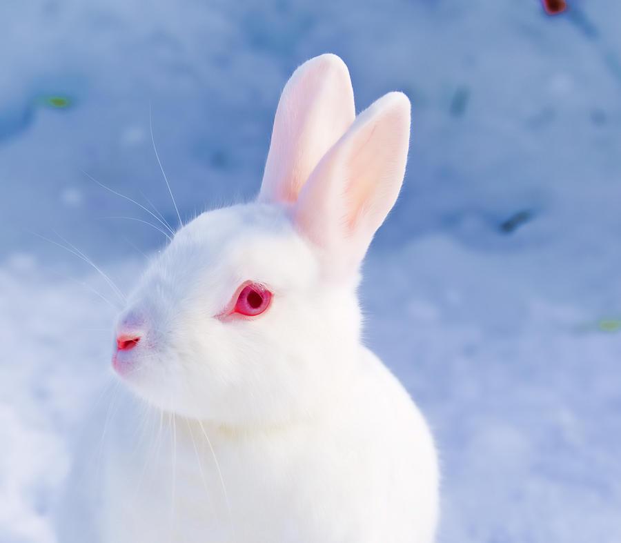 белый кролик с красными глазами фото делает это публично