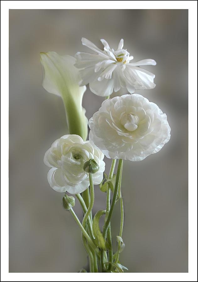 White Ranunculus  by Geraldine Alexander