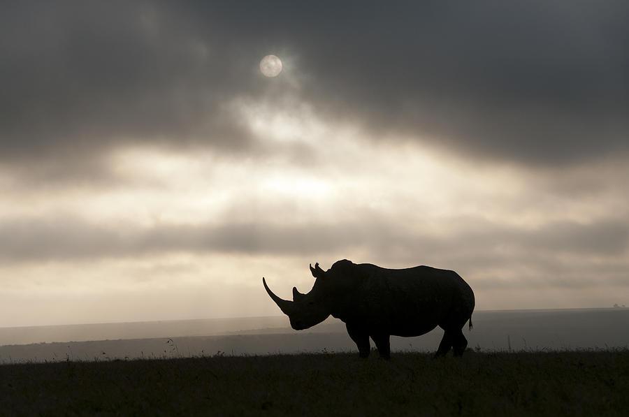 White Rhinoceros At Sunset Kenya Photograph by Tui De Roy