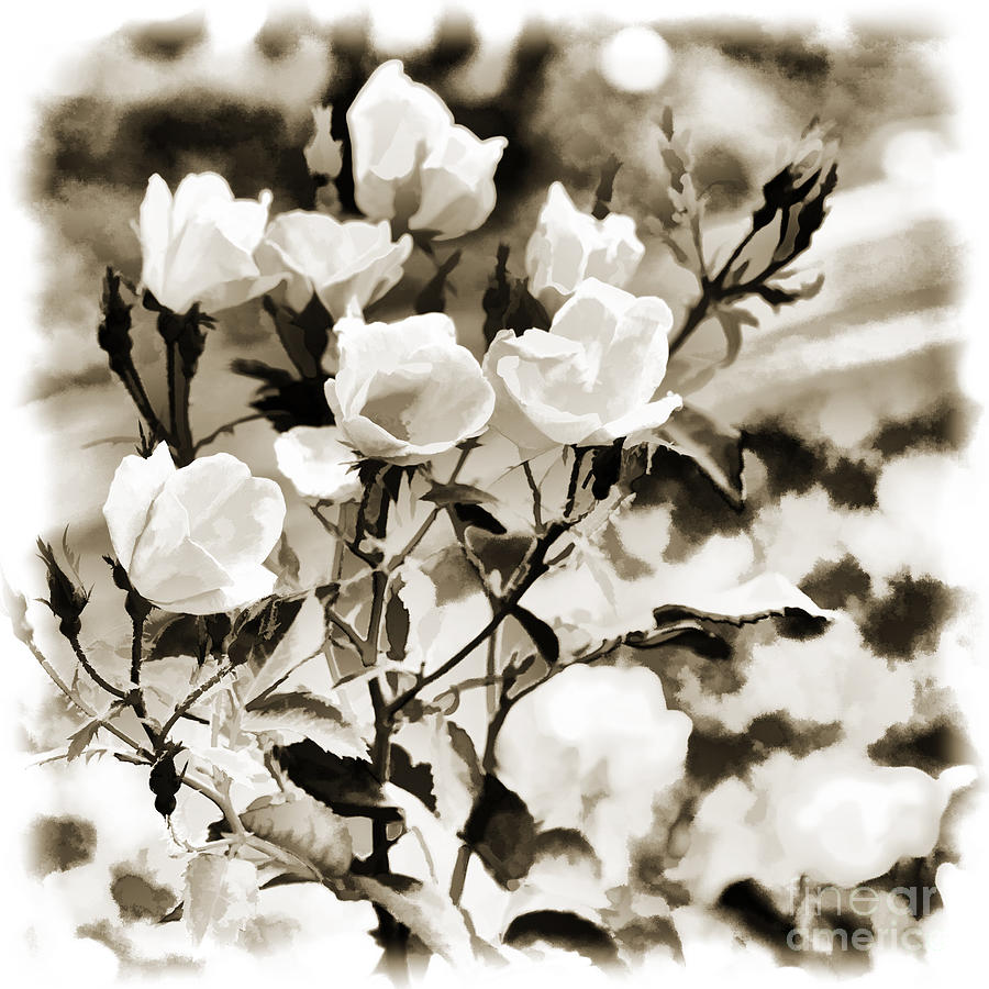 White Rose Flower In Black And White Sepia 322101 Painting By M K
