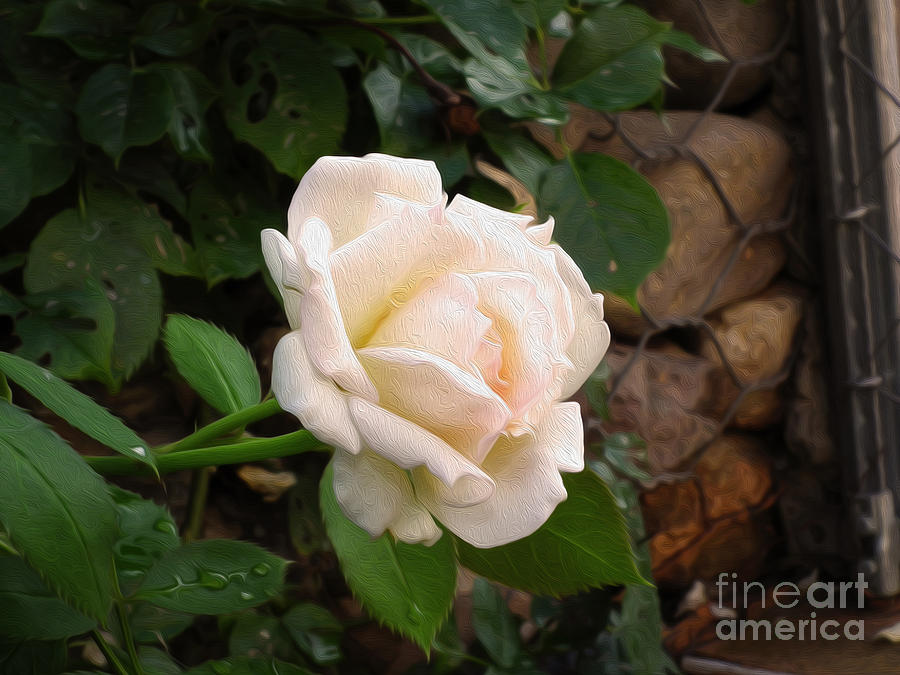 Rose Photograph - White Rose Green Oleo by Stefano Piccini