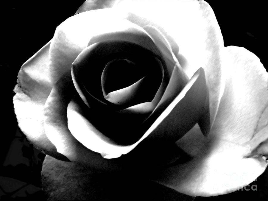 White Rose Photograph - White Rose by Nina Ficur Feenan