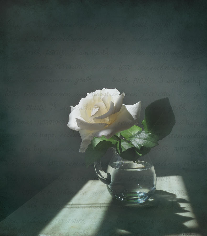 White Rose Still Life Photograph By Deborah Smith
