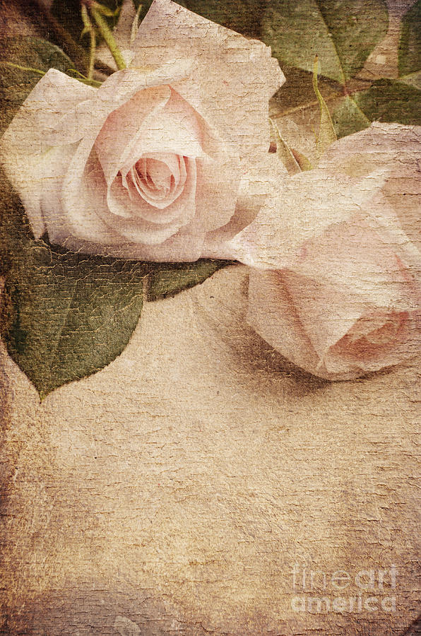 Roses Photograph - White Roses by Jelena Jovanovic