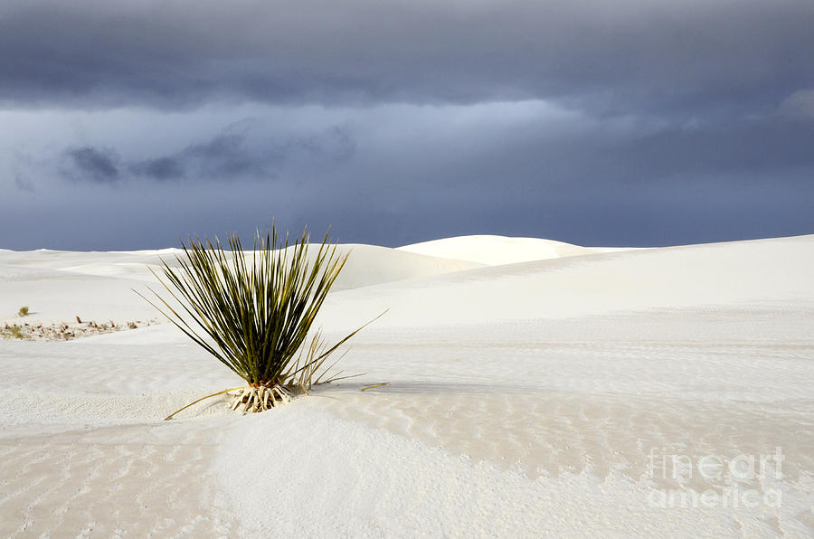 Alamagordo Photograph - White Sands Dark Sky by Bob Christopher