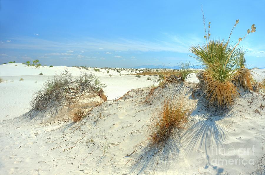 White Sands Photograph - White Sands Foliage by John Kelly