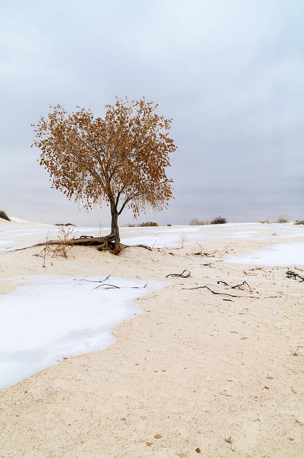 Desert Photograph - White Sands Lone Tree by Brian Harig
