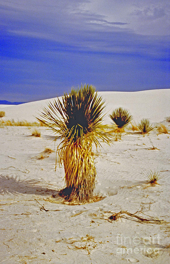 Adventure Photograph - White Sands National Monument Cactus by ImagesAsArt Photos And Graphics