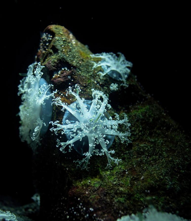 White Sea Corals Photograph by Lckk