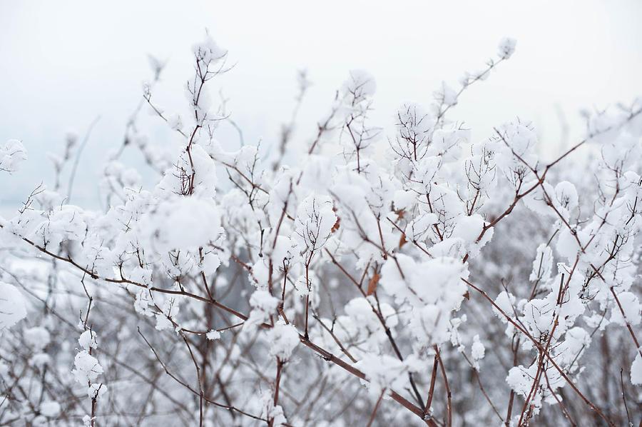 Abstract Photograph - White Silence by Zina Zinchik