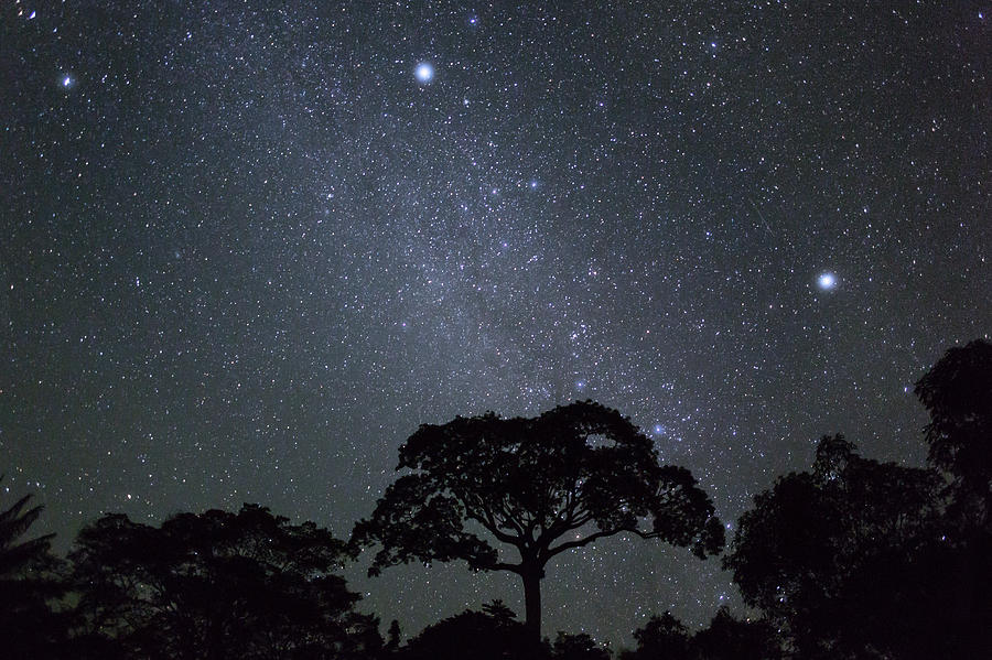 White Silk Floss Tree And Starry T Sky Photograph by Konrad Wothe