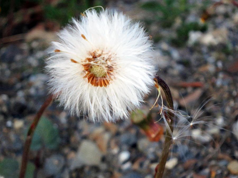 White Photograph - White Spring Wildflower by Patricia Januszkiewicz