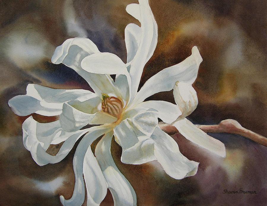 White Star Magnolia Blossom Painting By Sharon Freeman