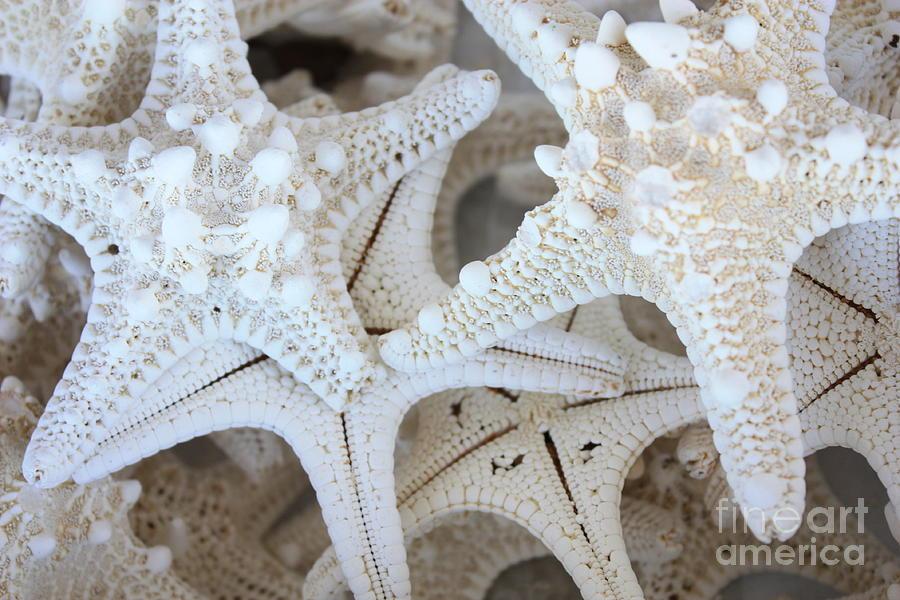 White Photograph - White Starfish by Carol Groenen