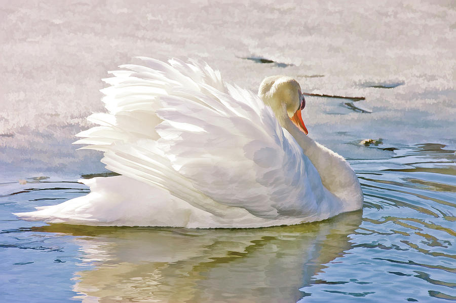 Waterfowl Photograph - White Swan by Elaine Manley