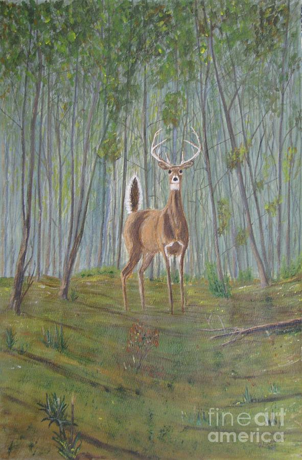 Deer Painting - White-tailed Deer - Impressionistic by Dana Carroll