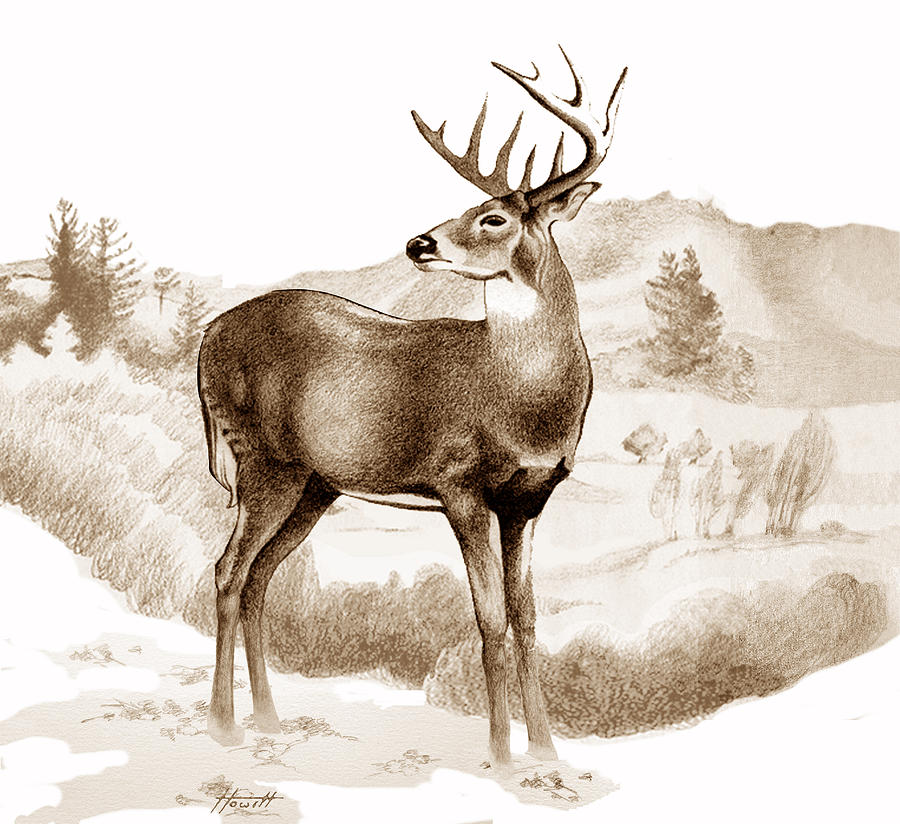 It's just a photo of Irresistible White Tailed Deer Drawing