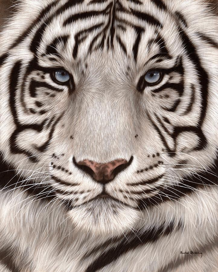 White Tiger Painting Painting by Rachel Stribbling