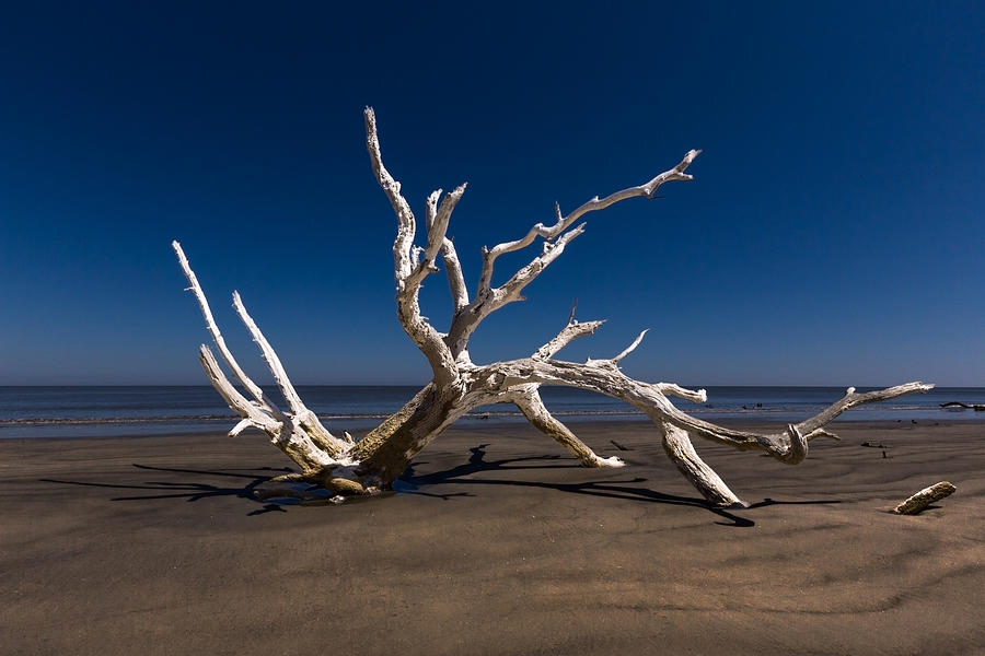 Clouds Photograph - White Tree by Debra and Dave Vanderlaan