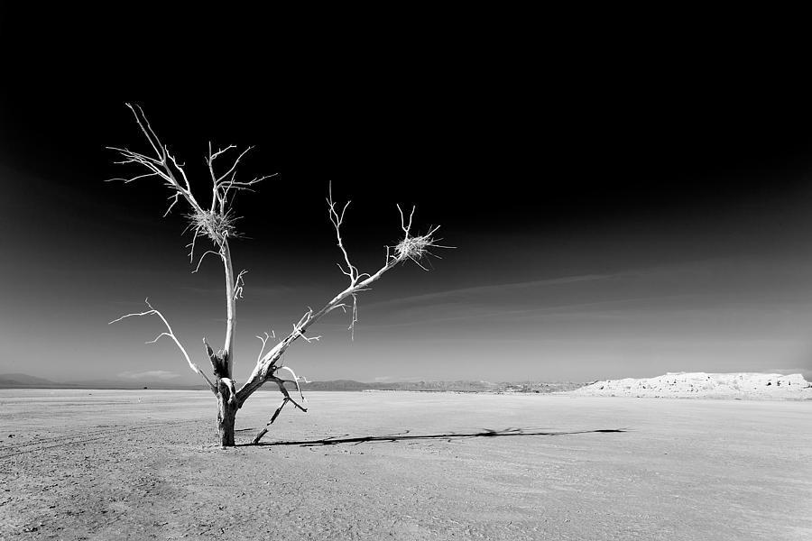 Abandoned Photograph - White Tree by Peter Tellone