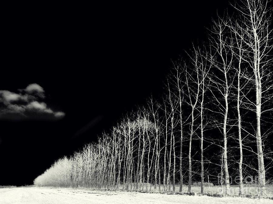 Autumn Photograph - White Trees by Stelios Kleanthous