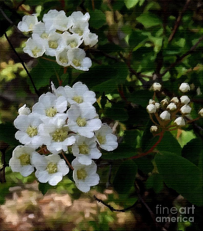 Floral Photograph - White Wildflowers by Diane Goulart