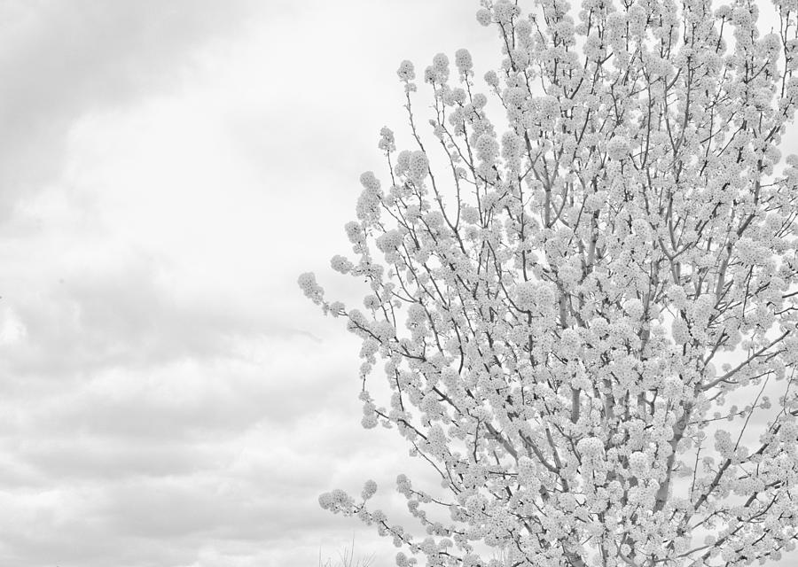 White Photograph - White Wood  by DeWaun Lacy