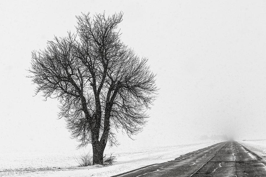 Snow Photograph - Whiteout by Chris Austin