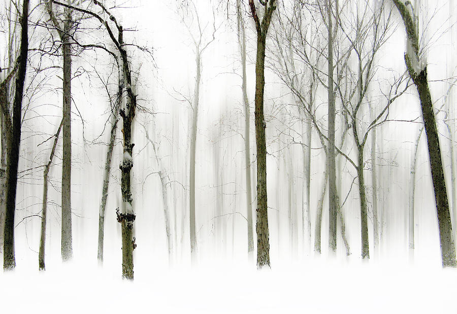 Winter Photograph - Whiter Shade Of Pale by Jessica Jenney