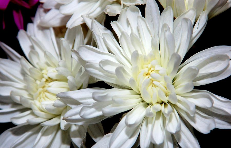 White Flowers Photograph - Whites by Kathy McCabe