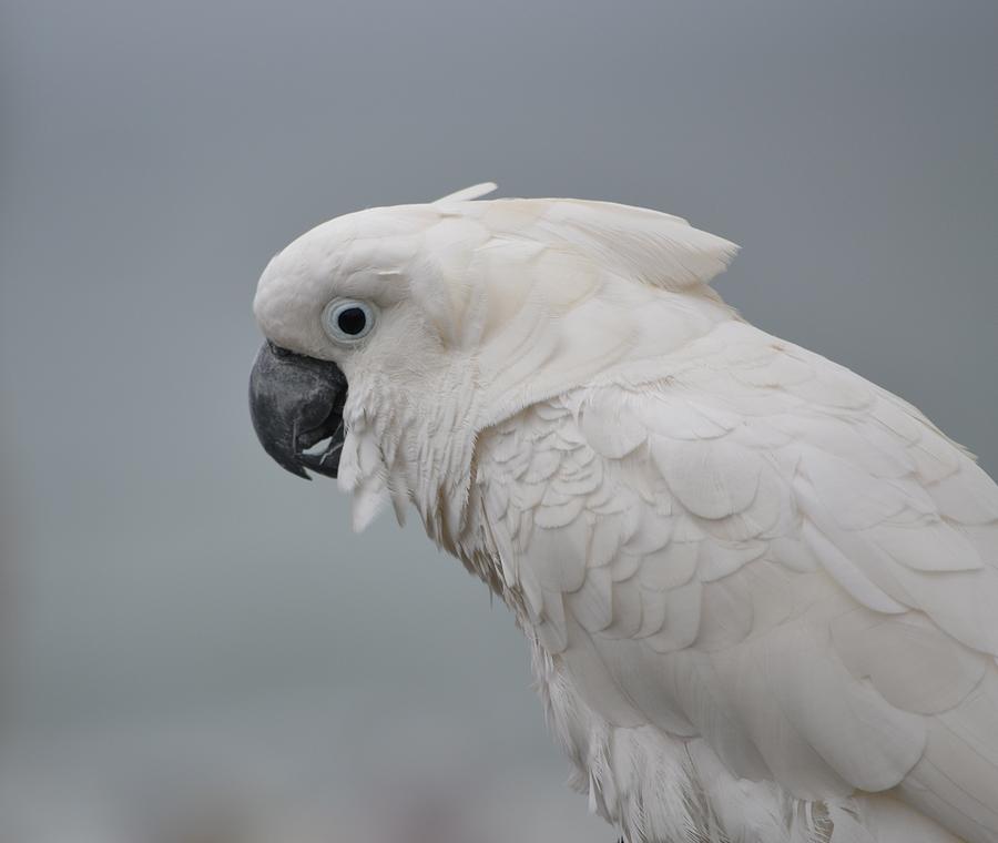 Bird Photograph - Whitest Bird by Kiros Berhane