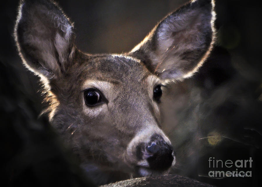 Deer Photograph - Whitetail Doe by Nava Thompson