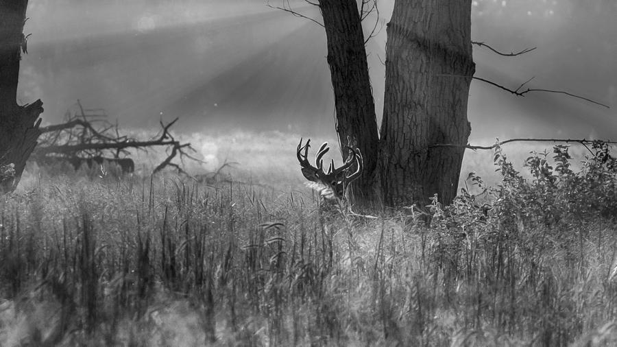 Sunrise Photograph - Whitetail Morning by Garett Gabriel