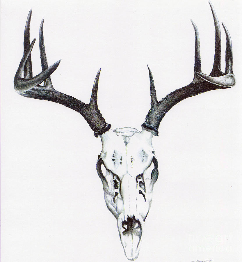 Whitetail Skull Drawing By Elizabeth Moug