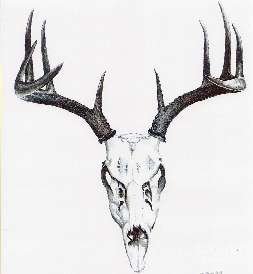 whitetail deer drawings fine art america