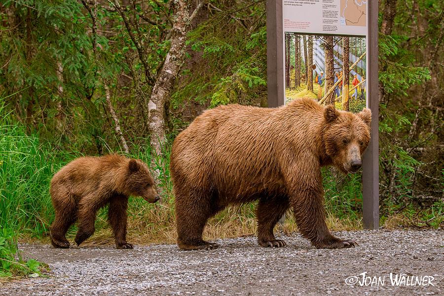 Alaska Photograph - Who are you? by Joan Wallner
