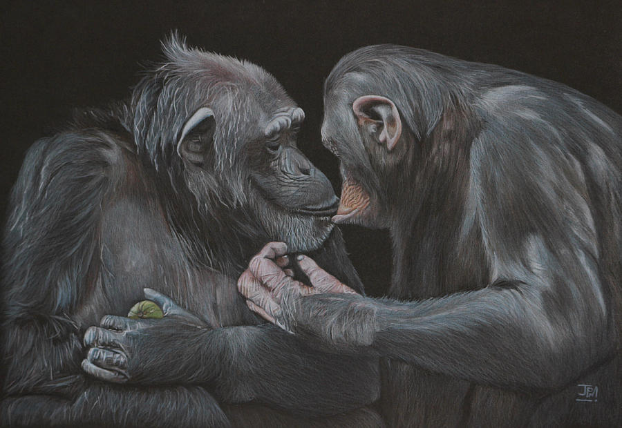 Chimps Drawing - Who Gives A Fig? by Jill Parry